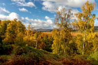 Insh Marshes and Autumn Birches Cairngorms National Park Scotland.
