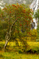 Glen Nevis. Falls of Steall . Rowan Tree . Western Highlands. Scotland.