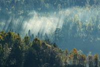 Loch Garry Forest. Sunbeams and Autumn Mists. Scottish Highlands.