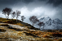 Blaven Birches in Winter. Torrin and Kilbride. Isle of Skye. Scotland.