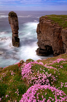 A view of Yesnaby Castle. Flowers. West Mainland Orkney. Scotland.