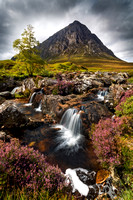 Buachaille Etive Mòr and Heather. Glen Etive.  West Highlands. Scotland.
