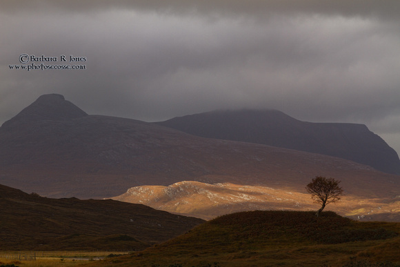 Quinag and The Rowan Tree. Assynt. North West Highlands . Scotland.