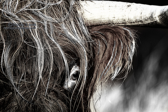 Highland Cow eye Dragan effect #. Isle of Skye. Scotland.