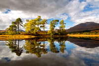 Loch Tulla. Pine and Larch in Autumn. Glen Orchy. Argyll and Bute. Western Highlands Scotland.