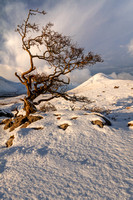 Tree, and Beinn na Cro. Red Cuillin. Torrin. Isle of Skye. Scotland.