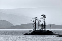 Loch Assynt Pines in the rain. North West Geopark. Highland Scotland. Mono
