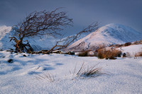 Red Hills, with snow and tree. Torrin. Isle of Skye. Scotland.