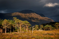 Torridon. Liathach and Pine Trees, Dark Skies. Wester Ross. North West Highlands. Scotland