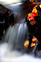 Maple Leaf and Waterfall, Fall, Scotland.